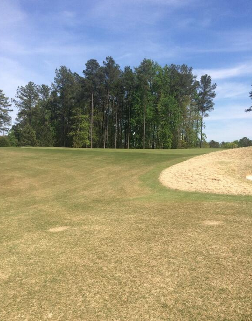 hasentree-number-2-green